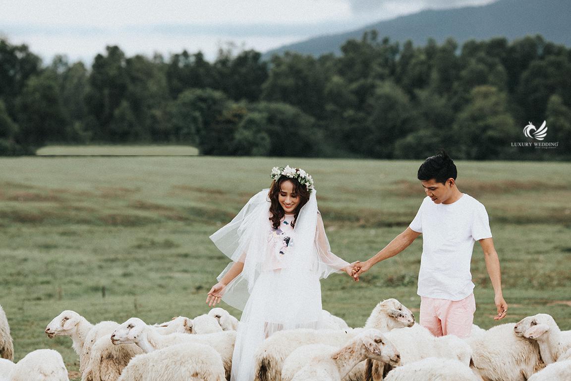 Chụp ảnh cưới với cừu hồ cốc