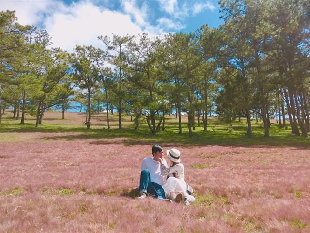 chụp ảnh cưới cánh đồng cỏ hồng đà lạt