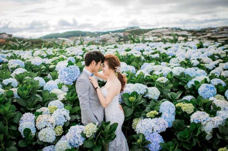 Chụp ảnh cưới cánh đồng hoa cẩm tú cầu