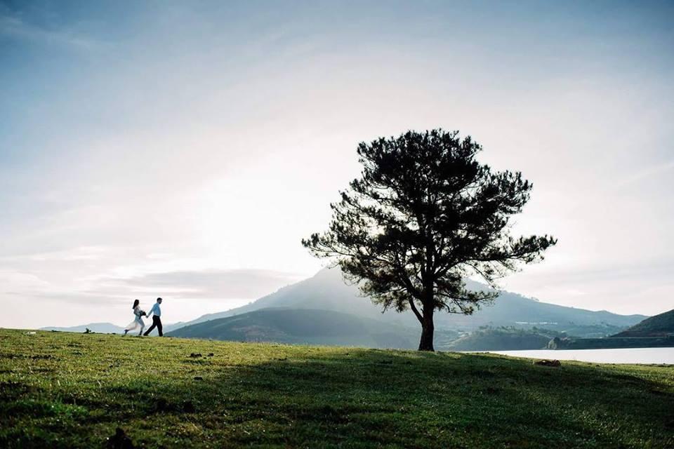 Chụp ảnh cưới cây thông cô đơn