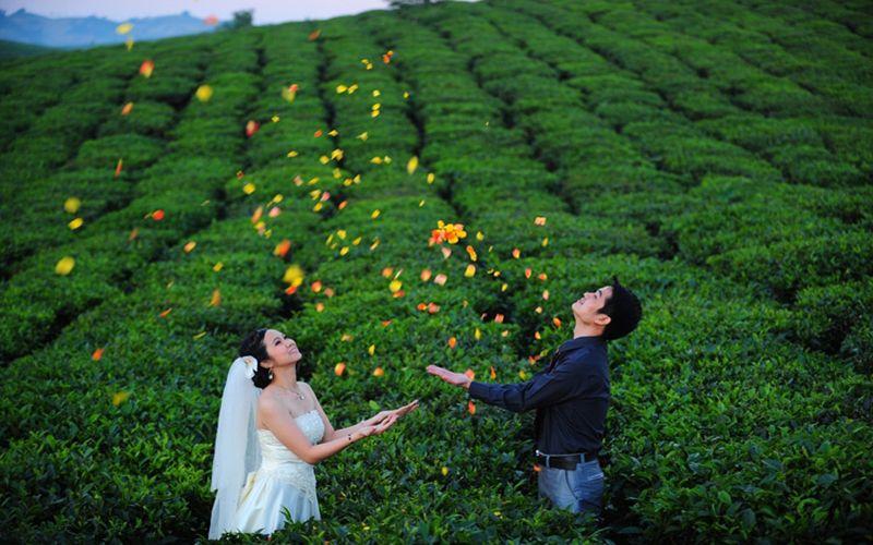 Chụp ảnh cưới đẹp đồi chè đông giang