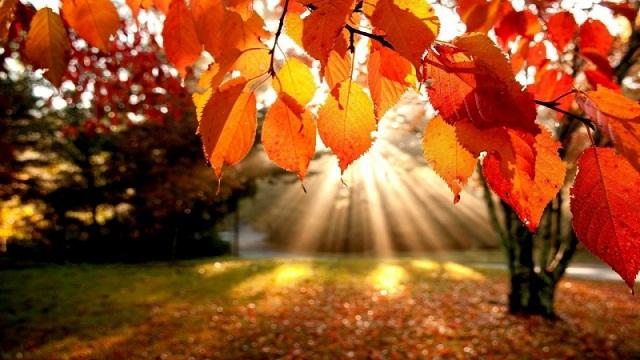 cảnh mùa thu