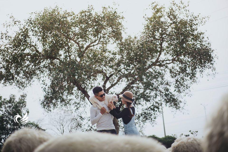 ảnh cưới cùng những chú cừu