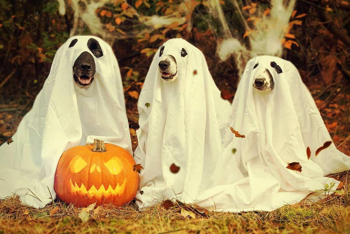 lễ hội halloween là ngày mấy